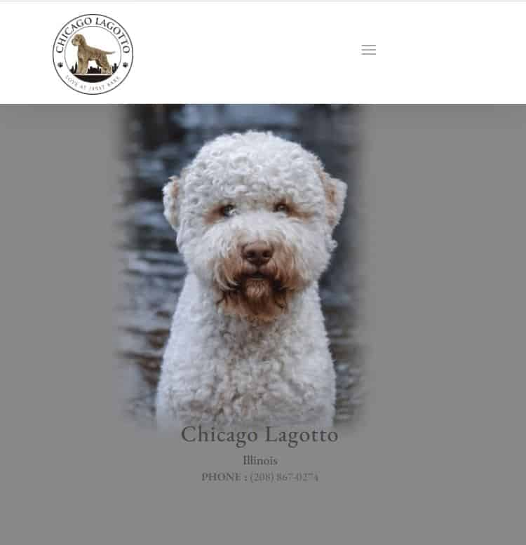 web design services example-2: Chicago Lagotto